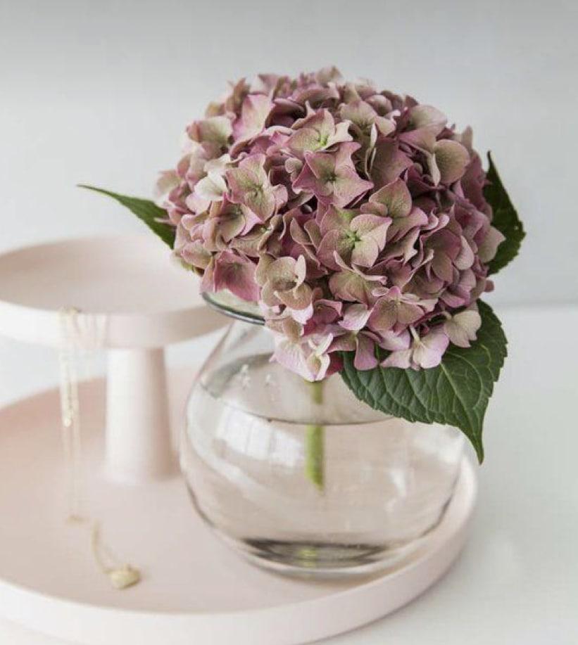 Las hortensias flores que en otoño tambien las encontraran super bonitas