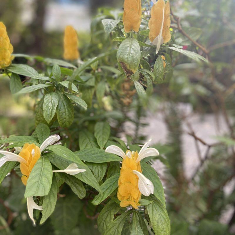 Variedad de flores en Gibraltar